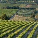Les vignerons de l'Hermitage veulent protéger leur appellation contre les utilisations abusives | Le vin quotidien | Scoop.it
