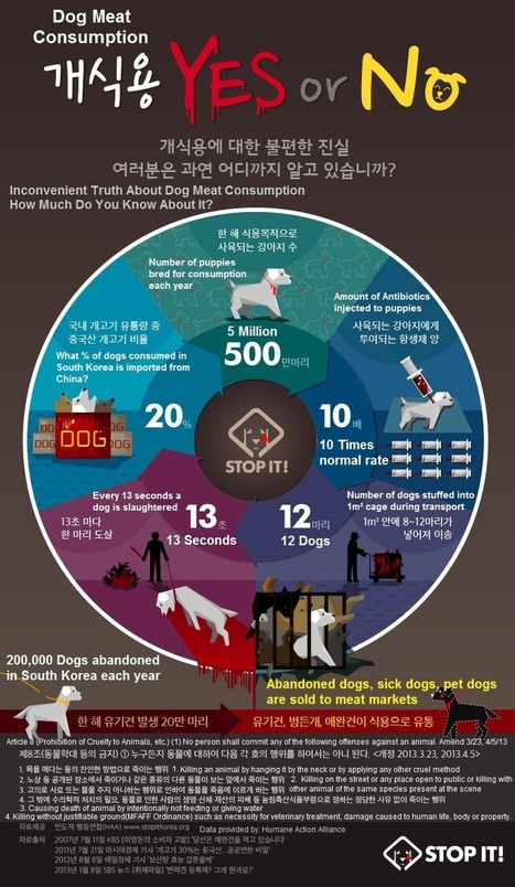 Stop the Dog and Cat Consumption in S. Korea! | Stop the Dog and Cat Consumption in S. Korea! | Nature Animals humankind | Scoop.it
