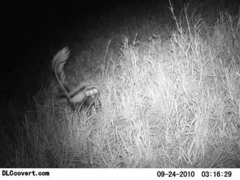 A snapshot of life on the savannah : Scientific Data | Using Wildlife Survey Data | Scoop.it