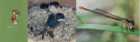 Démoustication: les épandages d'insecticide déséquilibrent les écosystèmes | EntomoNews | Scoop.it