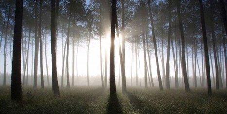 Climat : coup de chaud annoncé sur le massif forestier du sud-ouest - Sud-Ouest | Actualités écologie | Scoop.it