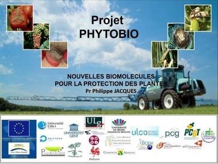 PhytoBio : un exemple de progrès du biocontrôle - ForumPhyto   Biocontrole   Scoop.it