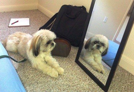 Los perros y los espejos : TiendAnimal   Perros   Scoop.it