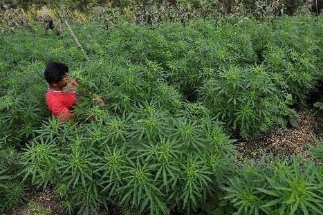MEXIQUE: Le cannabis pourrait être légalisé d'ici 5 ans, selon Vicente Fox | News from the World | Scoop.it