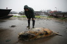 Rare Chinese Porpoises Dive Toward Extinction | Keeping the environment in our awareness | Scoop.it