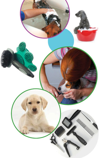 Dog & Pet Grooming Services Potton, Gamlingay & Sandy | Pet Grooming Potton | Scoop.it