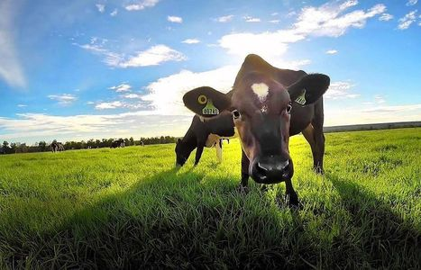 How a Cow Can Help the Climate: Design Inspired Farming Good for Business and Better for the World | Business as an Agent of World Benefit | Scoop.it