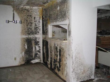 Safe Black Mold Removal Orange County   Gregory Cleaning & Restoration   Gregory Restoration   Scoop.it