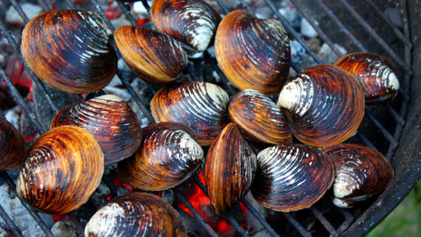 Summer Shell Game: Grilled Clams, Mussels, Shrimp : NPR | @FoodMeditations Time | Scoop.it