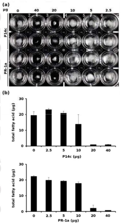 The sterol‐binding activity of PATHOGENESIS‐RELATED PROTEIN 1 reveals the mode of action of an antimicrobial protein   plant-pathogen interaction at the molecular level   Scoop.it