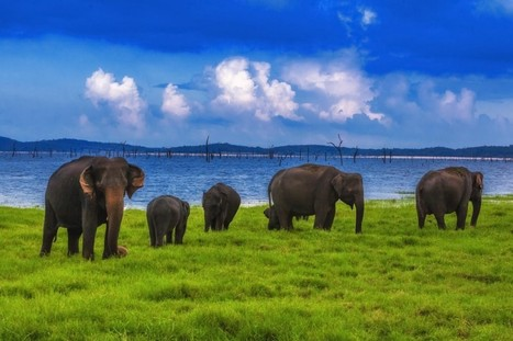 KAUDULLA NATIONAL PARK - WHERE THEY ARE BORN FREE AND LIVE FREE! | Well Known Places | Randoms | Scoop.it