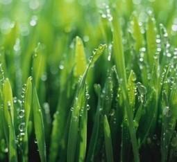 Lawn Care in Shreveport - Lawn Service - Matthews Landscape   Home Improvement Guides   Scoop.it
