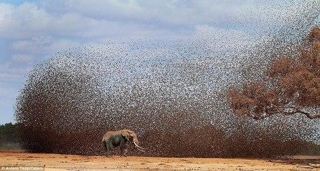 The Power of 1 Billion Chirps: Social Media | Social Media | Scoop.it