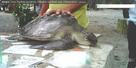 SEATURTLE.ORG - Global Sea Turtle Network | All about nature | Scoop.it