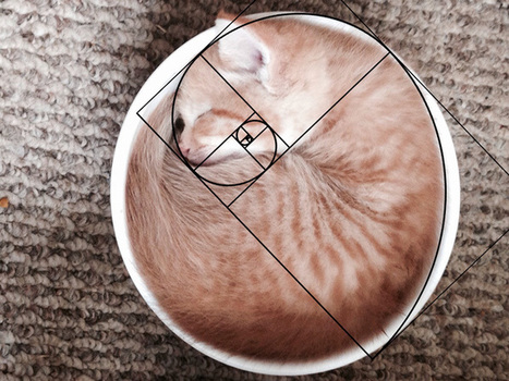 Furbonacci Sequence Proves That Cats Are Purrfect (10+ Pics) | @FoodMeditations Time | Scoop.it