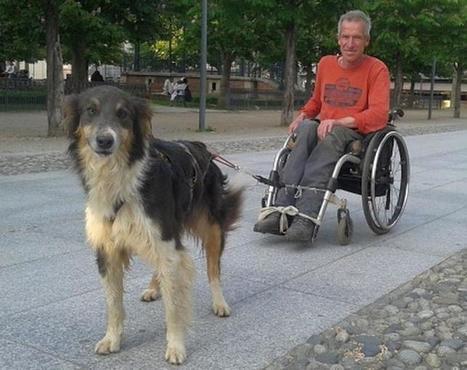 Albi. Il invente le fauteuil roulant à chien | CaniCatNews-actualité | Scoop.it
