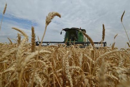 Céréales: La Russie va introduire des barrières douanières pour limiter les exportations   Russie et géographie   Scoop.it