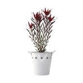 Flowering Plants | Plants Online | Scoop.it