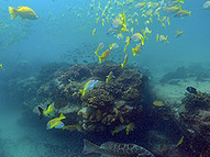 In Fight to Save Coral Reefs, Finding Strategies that Work by : Yale Environment 360 | Geography | Scoop.it