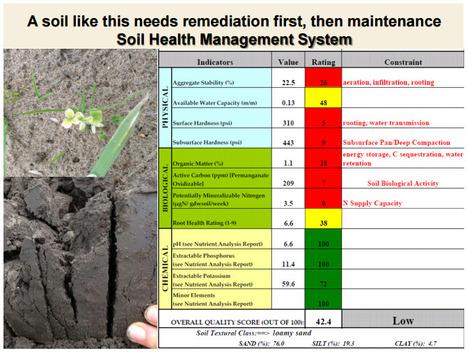 Les sols riches en chimie ont aussi besoin de remédiation et d'une bonne gestion de la santé du sol (physique et biologique) et le Cornell Soil Lab le fait avec le NRCS ! | MOF Matière Organique Fugace réactive du sol | Scoop.it
