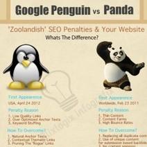 Google Penguin Vs Panda Update | Visual.ly | Best Google Panda Tips and Guides | Scoop.it