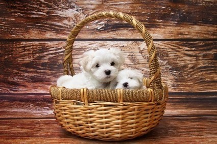 How to Choose a Puppy   Animal Bliss   Animal Welfare   Scoop.it