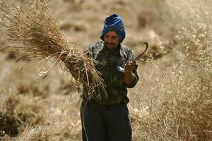Big Algerian Wheat Purchase Spooks Traders - WSJ.com   Coveting Freedom   Scoop.it