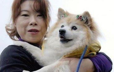 Le plus vieux chien du monde est mort au Japon, âgé de 26 ans | Mais n'importe quoi ! | Scoop.it