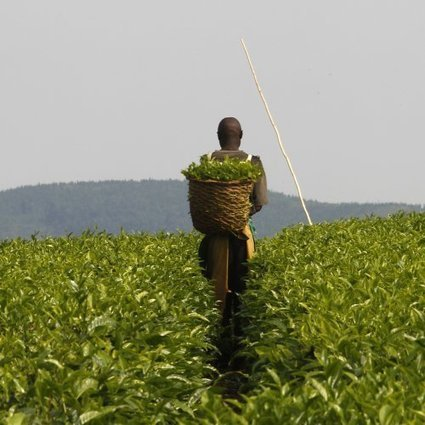Growing Africa's agriculture | Food security | Scoop.it