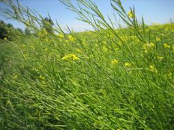 Le soja, un ennemi pour l'environnement | Beewatch | Scoop.it