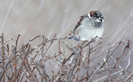 The week in wildlife – in pictures   Sustainable Futures   Scoop.it