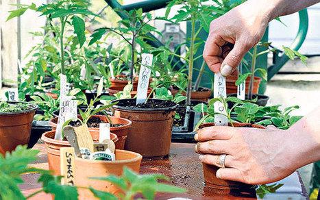Ten tips for success with indoor seedlings - Telegraph | home, plumbing and gardening tips | Scoop.it