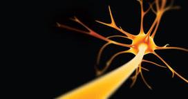 Redes Neuronales: Tipología | Robotica y Redes Neuronales Artificiales | Redes de neuronas artificiales | Scoop.it