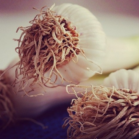 Garlic on blue : The Fresh Garlic Collection | @FoodMeditations Time | Scoop.it