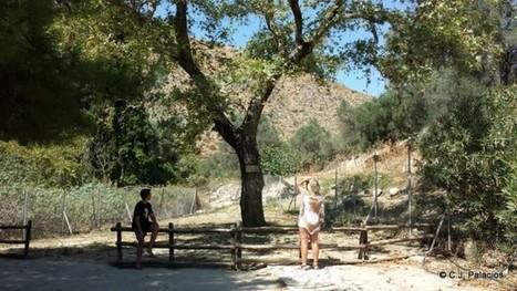 Bajo este árbol Zeus se cepilló a Europa | LVDVS CHIRONIS 3.0 | Scoop.it
