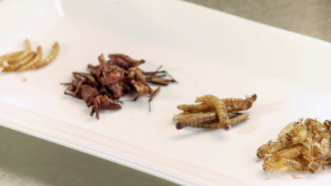 Food trend: Insects crawling onto the menu | Entomophagy: Edible Insects and the Future of Food | Scoop.it