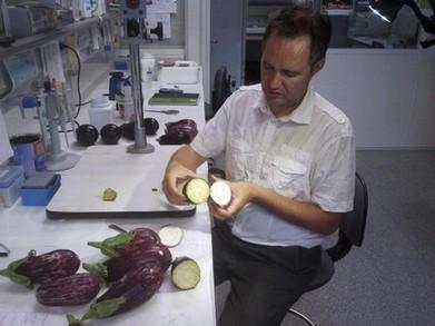 Trabajan modificación genética berenjenas ricas en antioxidantes | Mejora genetica | Scoop.it