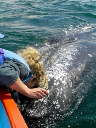 Whale watching in Mexico...such a magical experience! - Sharon Cracknell | Baja California | Scoop.it