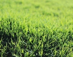 Lawn Turf Suppliers and Lawn Maintenance: Sydney Turf Supplies Ordering and Installation Guide | Sydney Turf Supplier | Scoop.it