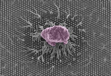 nanoART | kaleidoscope | Scoop.it