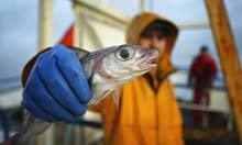 50% in 10 years: a new global collaboration to restore fisheries | The Big Picture | Scoop.it
