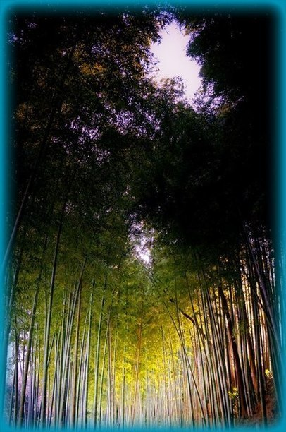 Bamboo Extract: The Richest Known Source of Natural Silica   Holistic & Alternative Health   Scoop.it
