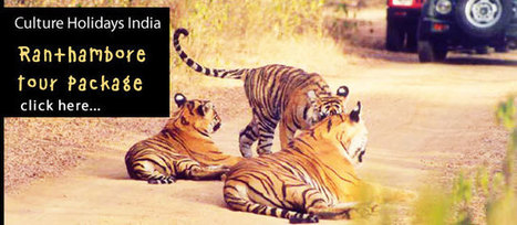 Ranthambore Tour Package | Tour Operator India | Scoop.it