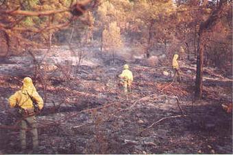 Deforestación - Monografias.com   LA DESFORESTACION DE ARBOLES   Scoop.it