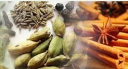 Ayurvedic Treatments – Natural Cure of All Modern Health Disabilities | Ayurvedic Treatments | Scoop.it