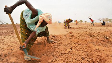 L'agriculture d'Afrique subsaharienne joue la montre contre le changement climatique   Questions de développement ...   Scoop.it