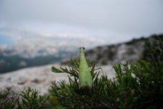 Quels paysages pour les Calanques ? - Parc National des Calanques - Marseille | Parc National des Calanques, actualites et WEB TV du parc | Scoop.it