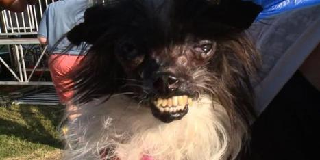 """""""World's Ugliest Dog"""" crowned at California fair 