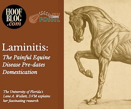 Fran Jurga`s Hoof Blog: Research: The Paleopathology of Laminitis in Horses with Lane A. Wallett, DVM | Hoofcare and Lameness | Scoop.it