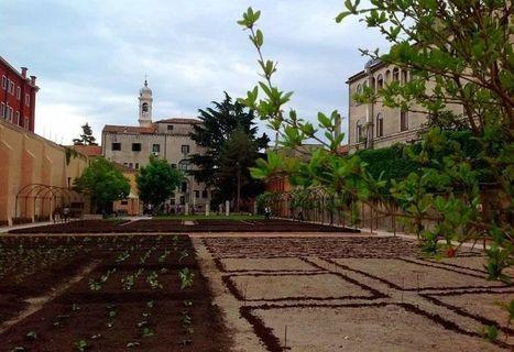 La rinascita del vino in Laguna - La Repubblica | Italica | Scoop.it